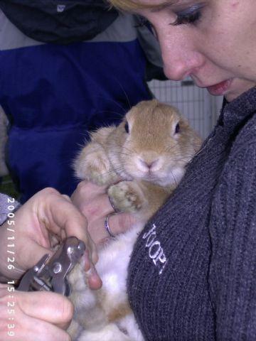 Zlomený drápek u králíka